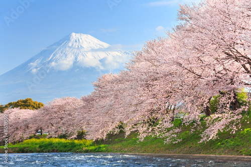 Spoed canvasdoek 2cm dik Japan Cherry blossoms or Sakura and Mountain Fuji in background