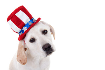 Patriotic Puppy Dog © Stephanie Zieber