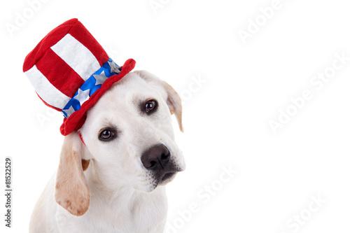 Papiers peints Porter Patriotic Puppy Dog