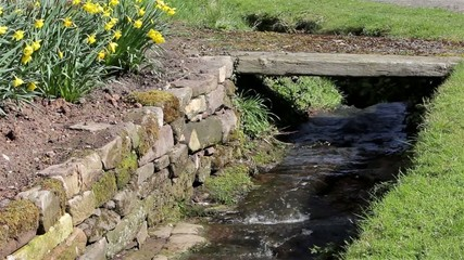 Stream Water Flowing Past Grass Bank, Daffodil Flowers