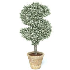 money tree made of hundred dollar bills, isolated on white backg