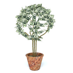 money tree made of hundred dollar bills, isolated on white backg
