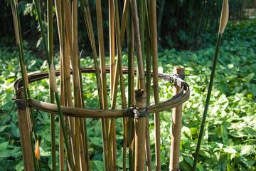 bamboo parterre