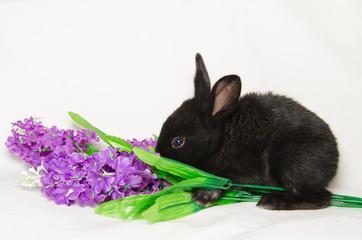 Coniglietto mangia dei fiori viola