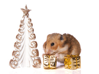 Hamster with christmas present