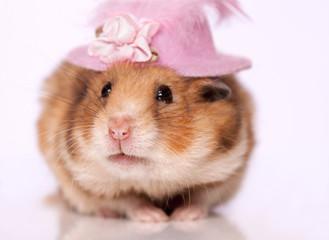 Hamster wearing hat
