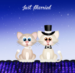 Marriage of cats