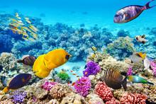 "Постер, картина, фотообои ""Underwater world with corals and tropical fish."""