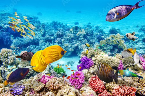 Underwater world with corals and tropical fish. - 81535181
