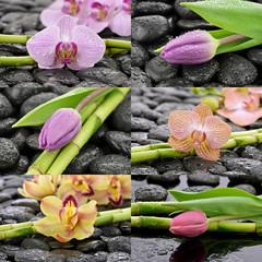 Mokre storczyki z tulipanami