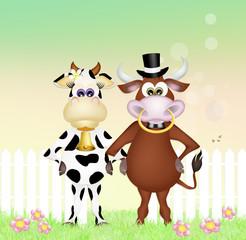 cows couple