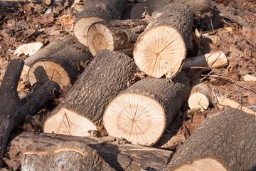log on leaves