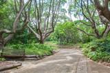 Walkway in the  Kirstenbosch National Botanical Gardens poster