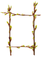 Frame fresh young budding spring branches. branches of cherry
