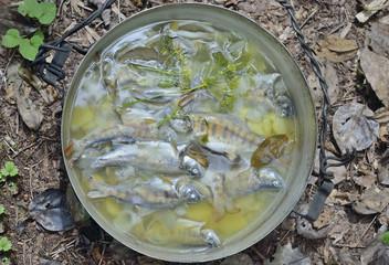 Fresh fish-soup 9