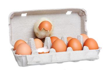 Cute newborn chick with eggs