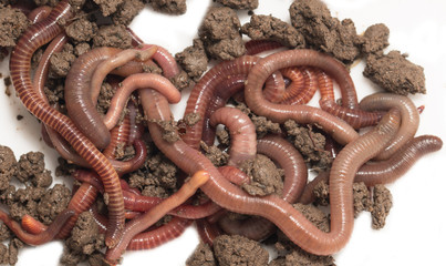 a bunch of worms to the earth on a white background