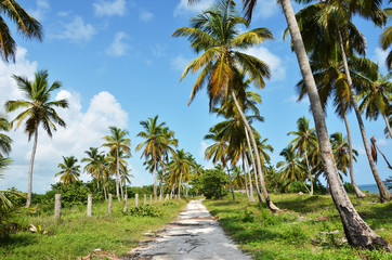 road under the palm