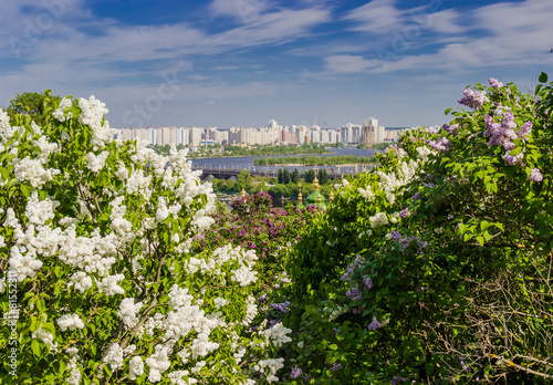 Foto op Canvas Lilac Lilac Garden