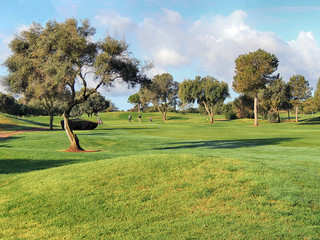 Fresh sunny morning on a golf course