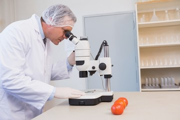 Food scientist looking through a microscope