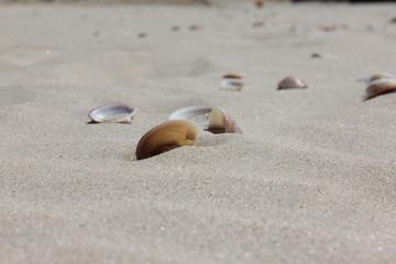 Ракушки в песке