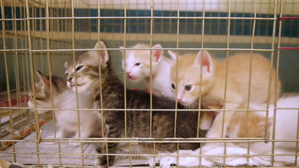 Cute Kittens in Shelter Cage