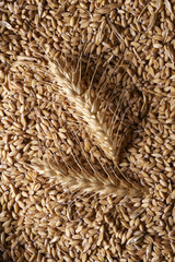 Grains of wheat, and tenons