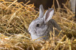 Rabbit on Dry Grass - 81564739