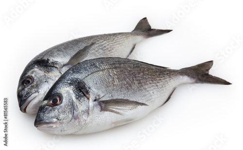 Papiers peints Poisson Dorado fish isolated on white background with clipping path