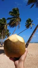 Coconut world