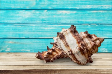 Animal. Seashell collection isolated on the white background