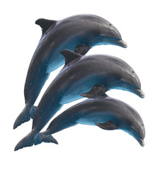 jumping dolphins on white