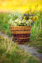 Basket Full of Fresh Wild Field Flowers