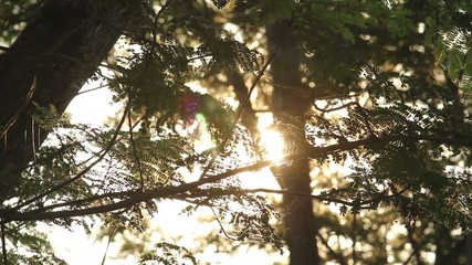 Sun shines through the tree leaves.And flare effect lighting.