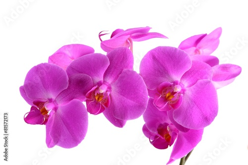 Fotobehang Orchidee Closeup shot of pink orchid on white background