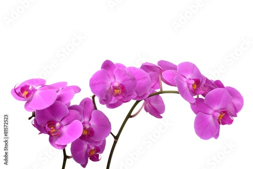Keuken foto achterwand Orchidee Macro shot of pink orchid isolated on white