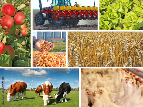 Deurstickers Koe Agriculture - collage, food production