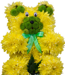 Chrysanthemum bear