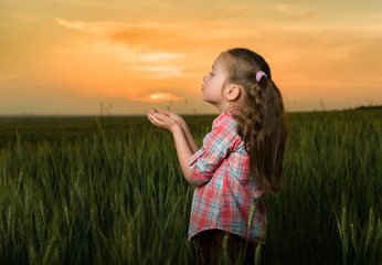 girl child portrait in the field at sunset