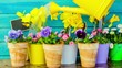 Spring garden, watering flowers
