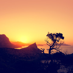 Sunrise in mountains with tree silhouette and sea.