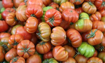 Tomaten der Sorte Bührer Kehl