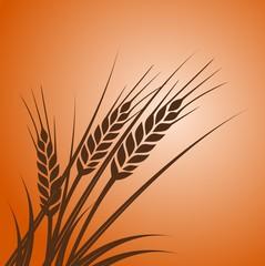 Wheat at sunset - illustration