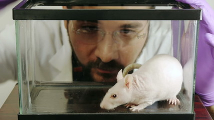 Lab Rat Taken By Scientist