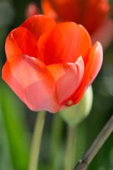 Fiore e prato, giardino sfondo prato sfocato