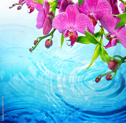 purple orchid on rippled blue water - freshness  concept