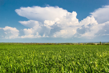 Green field on the background of blue sky