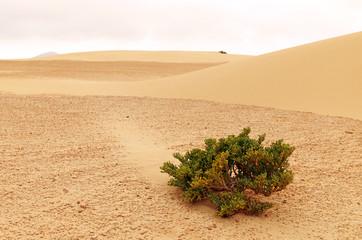 Sand dunes of Corralejo, northern Fuerteventura island, Spain