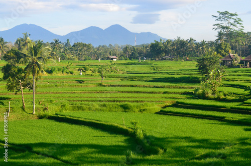 Foto op Plexiglas Indonesië Rice Field Asia